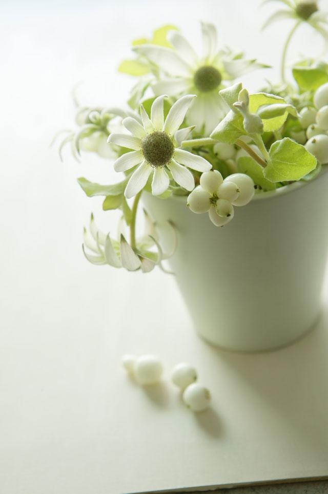 花王ロリエ様 フランネルフラワーのアレンジメント