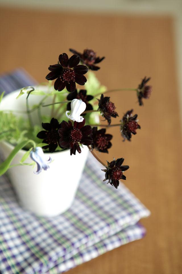花王ロリエ様  カカオの香り チョコレートコスモスアレンジメント